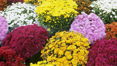 Mums for Missions